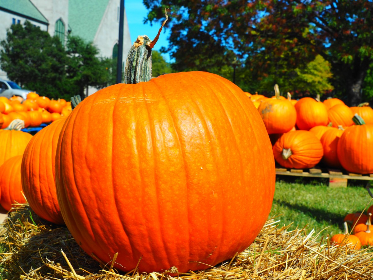 10 FACTS ABOUT PUMPKINS
